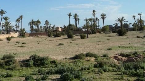 terrain proche du circuit de la palmeraie