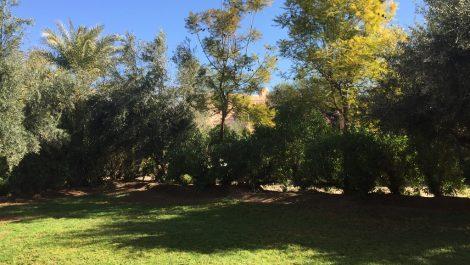 Charmant rez-de-jardin en Palmeraie