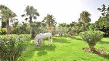 Vaste projet de deux hectares à 13 kilomètres de Marrakech (ferme équestre)